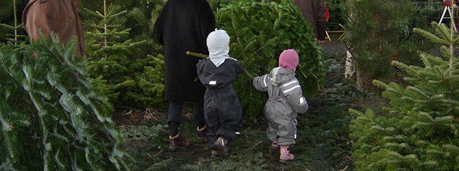 Køb årets juletræ og få en heldagsoplevelse for hele familien